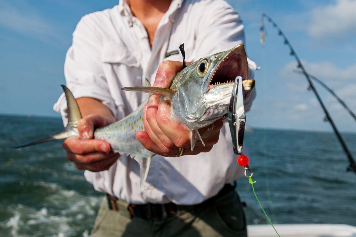 fish caught on st pete beach charter