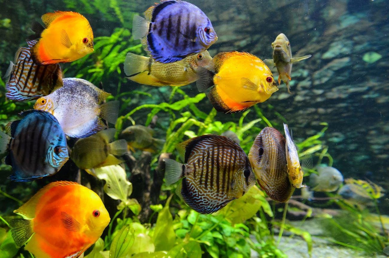 aquarium in clearwater