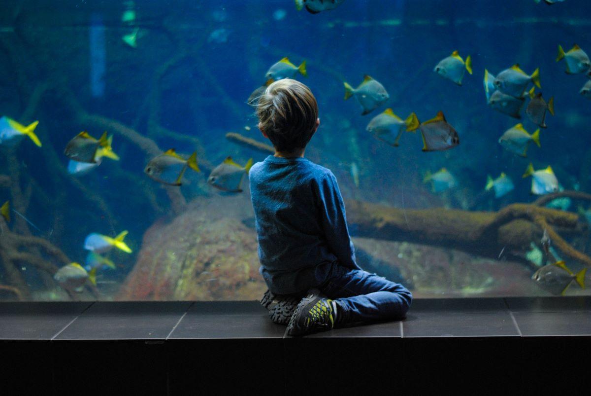 boy next to aquarium tank by st pete beach